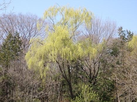 きれぎれの風彩「北本自然観察公園0325樹」180403-11