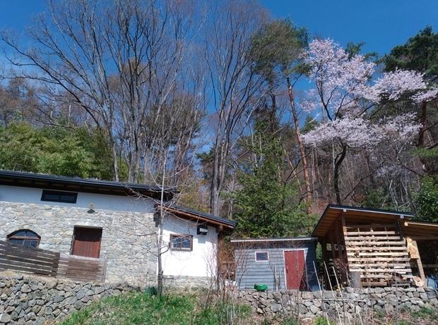 裏山のサクラと石積みの家