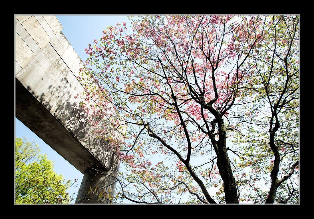ギャラりー前の花水木