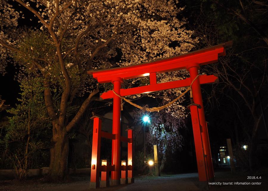 《いわき市桜情報》三島八幡神社のシダレザクラ ライトアップ開催中! [平成30年4月4日(水)更新]2