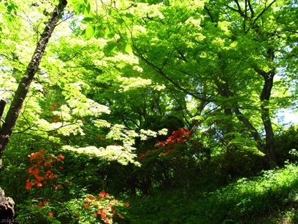 松ヶ岡公園のツツジが見頃です! [平成30年4月22日(日)更新]05