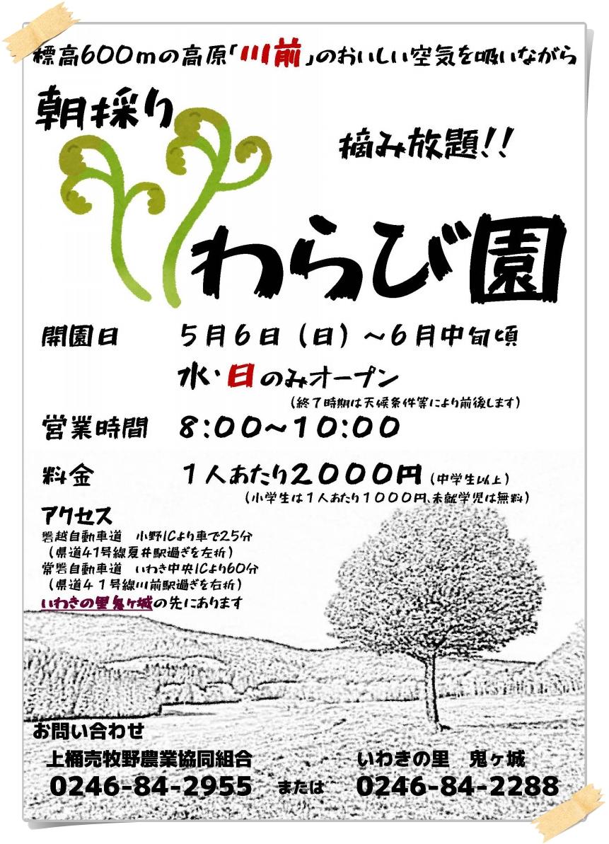 摘み放題!上桶売「わらび園」オープン!! [平成30年5月7日(月)]1