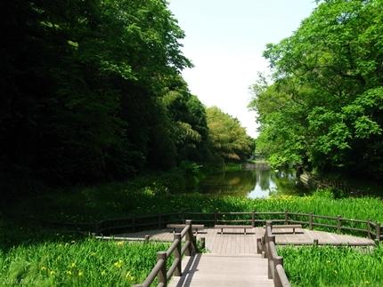丹後沢公園のキショウブが見頃です! [平成30年5月16日(水)更新]15