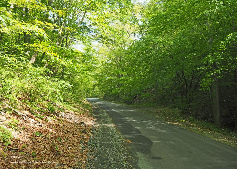 田人町綱木地区のクマガイソウが開花しました! [平成30年4月29日(日)更新]3