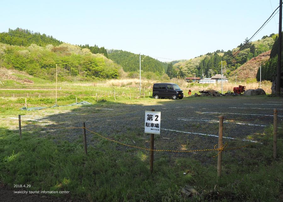 田人町綱木地区のクマガイソウが開花しました! [平成30年4月29日(日)更新]4