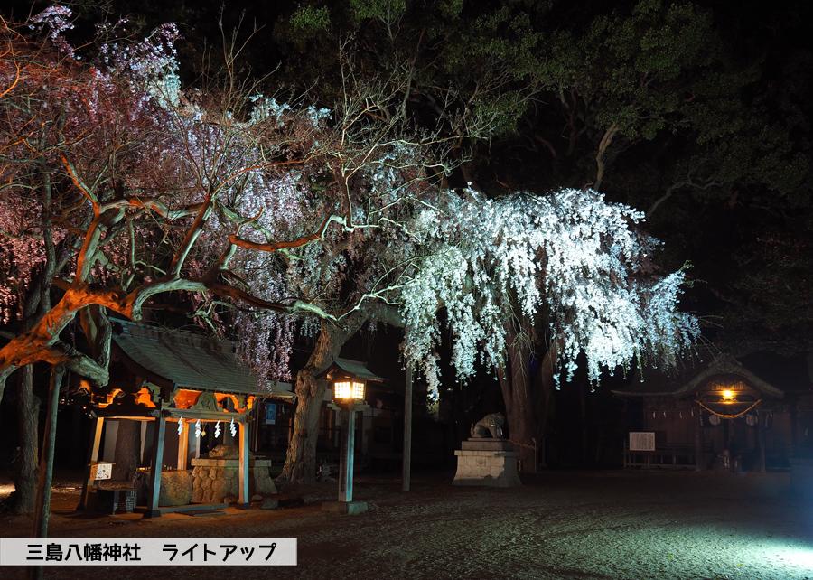 《いわき市桜情報》三島八幡神社のシダレザクラ ライトアップ開催中! [平成30年4月4日(水)更新]4