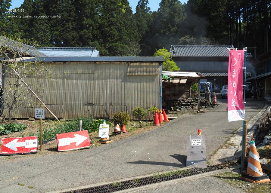 田人町綱木地区のクマガイソウが開花しました! [平成30年4月29日(日)更新]5