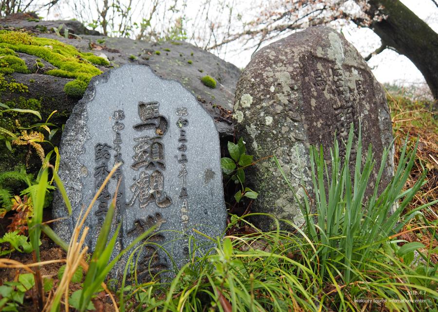 《いわき市桜情報》田人の石割桜がほぼ見頃です!! [平成30年4月8日(日)更新]6