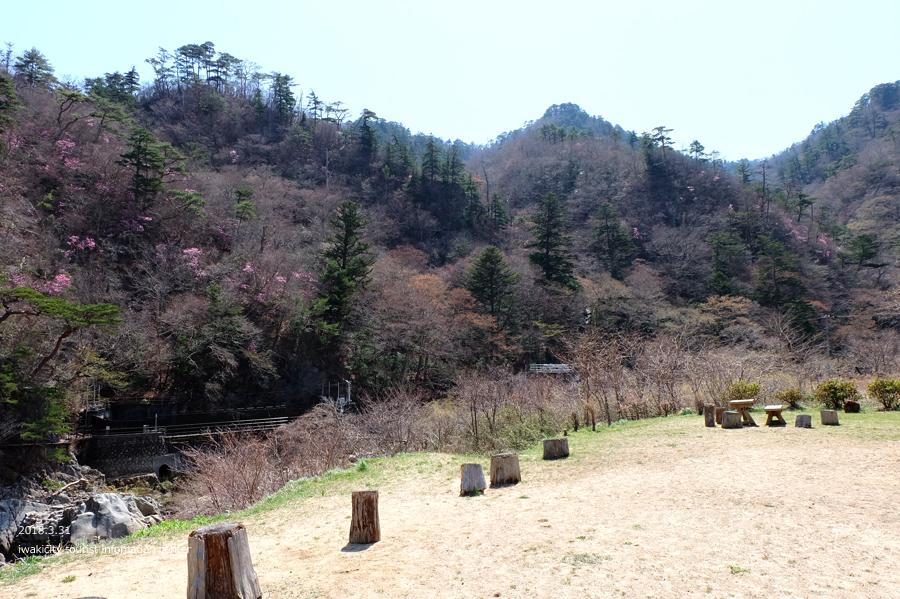 夏井川渓谷 アカヤシオが開花しました! [平成30年3月31日(土)更新]8