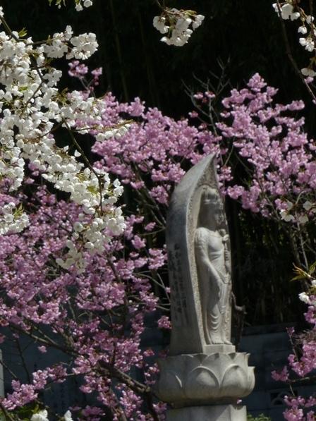 うば桜 & 陽光