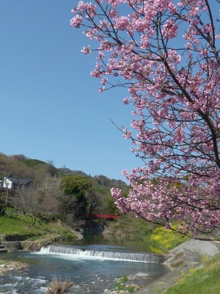 石手川緑地 陽光 2