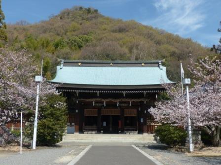 ソメイヨシノ (護国神社) 1