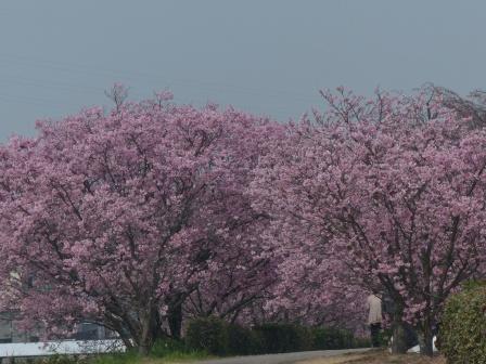 赤坂泉公園 陽光 1