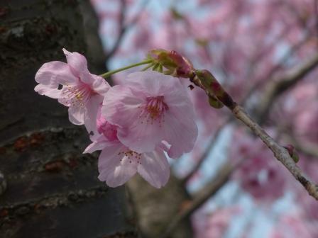 赤坂泉公園 陽光 2