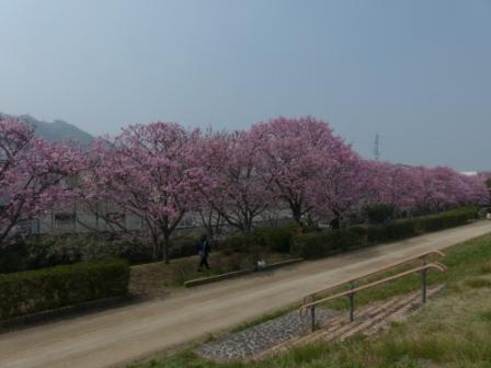 赤坂泉公園 陽光 3
