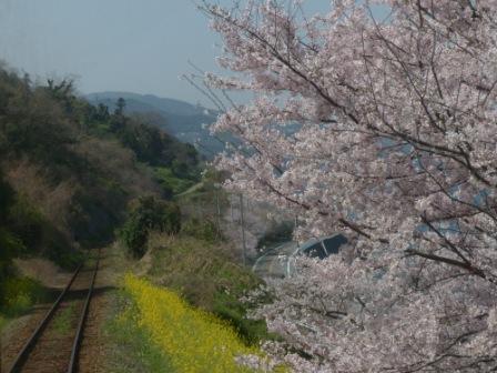 車窓 桜風景
