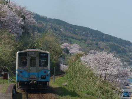 下灘駅 桜 & キハ54