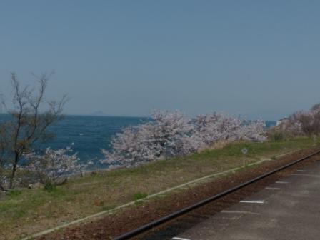 下灘駅のホームから見た桜風景 2