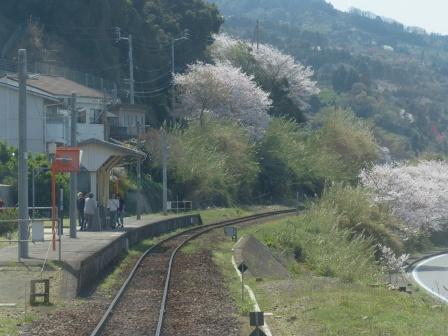 車窓 下灘駅ホーム & 桜風景