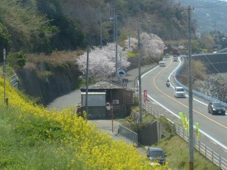 車窓 閏住地区 菜の花 & 桜
