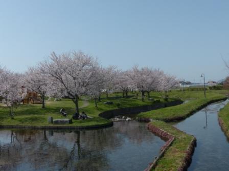 福徳泉公園 桜 1