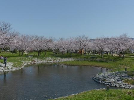 福徳泉公園 桜 4