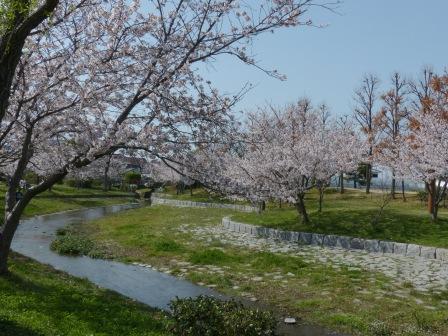 福徳泉公園 桜 5