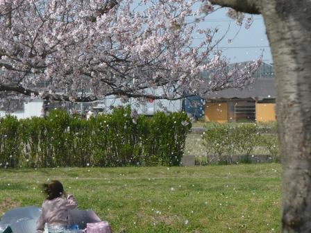 福徳泉公園 桜 8