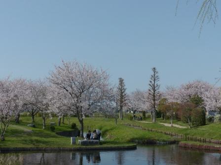 福徳泉公園 桜 7