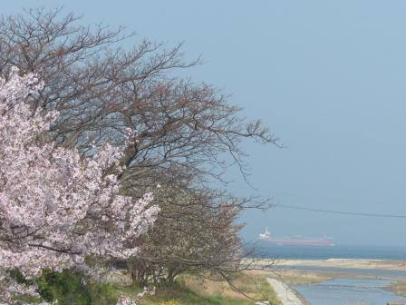 桜風景 4