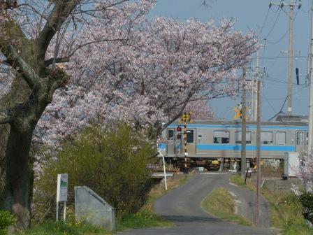 桜 & 列車