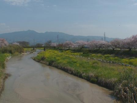 桜風景 3