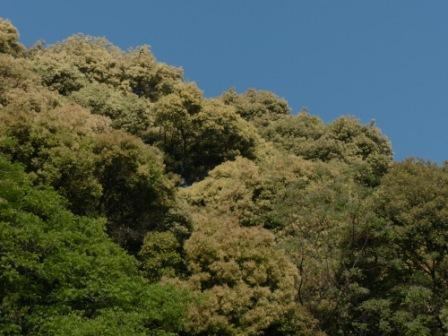 お城山 ツブラジイ 3