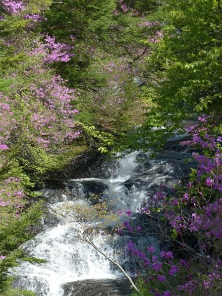 竜頭の滝 & トウゴクミツバツツジ 1