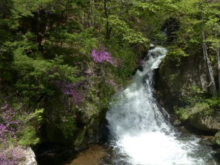竜頭の滝 & トウゴクミツバツツジ 3