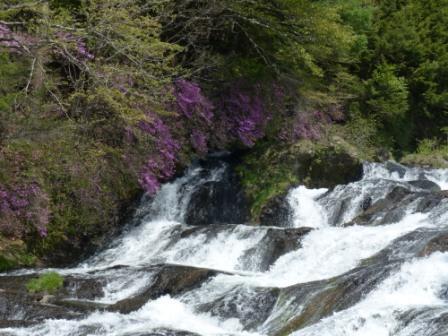 竜頭の滝 & トウゴクミツバツツジ 4