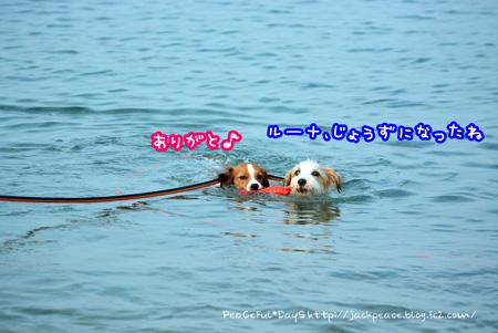 15812_umi5.jpg