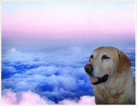 虹の雲の上