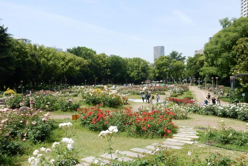 靭公園バラ 059