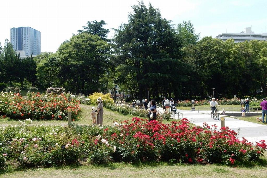靭公園バラ 082