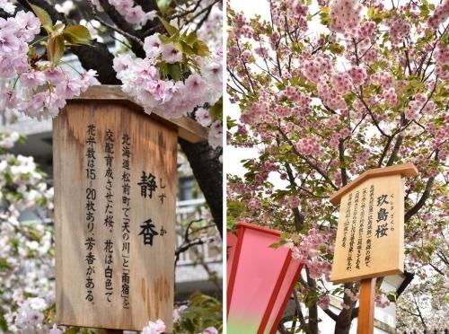 ⑤静香と玖島桜