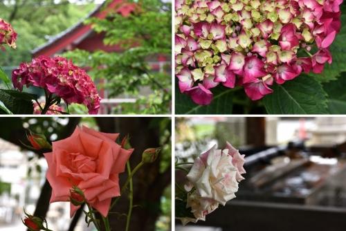 土佐稲荷の花