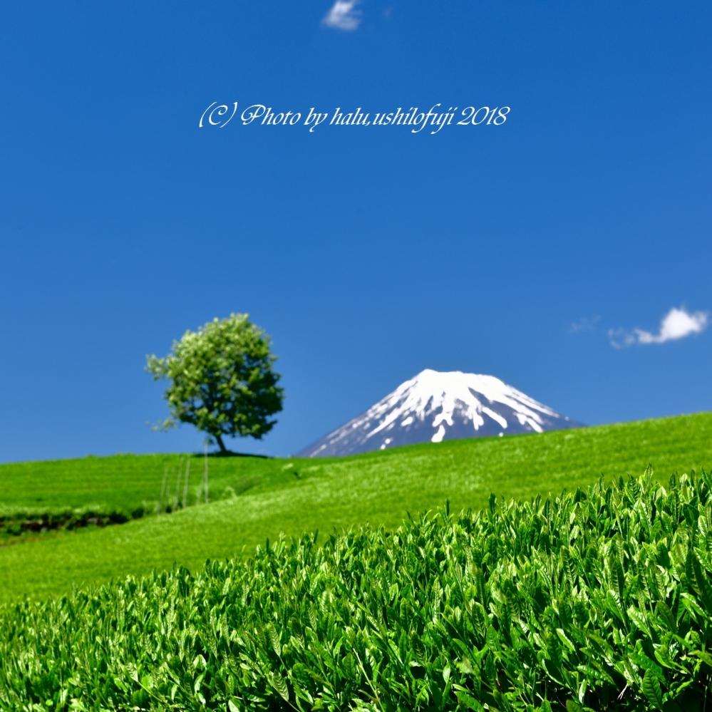 茶畑  2SN