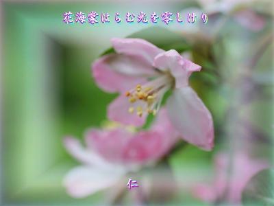 『 花海棠はらむ光を零しけり 』物真似575春zrw0403