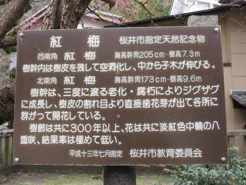 初瀬の里 (5)