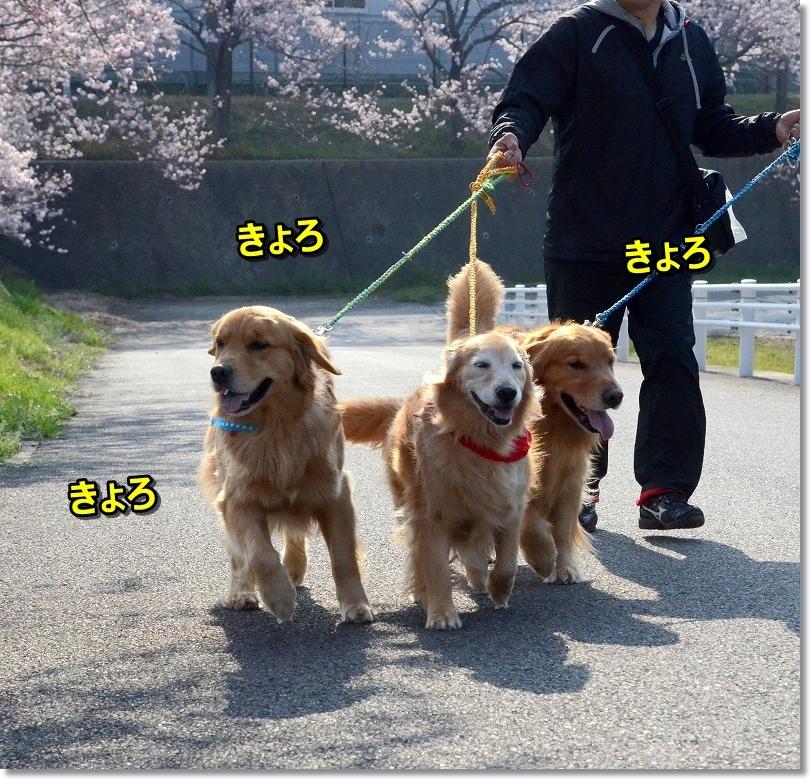DSC_9041キョロキョロ