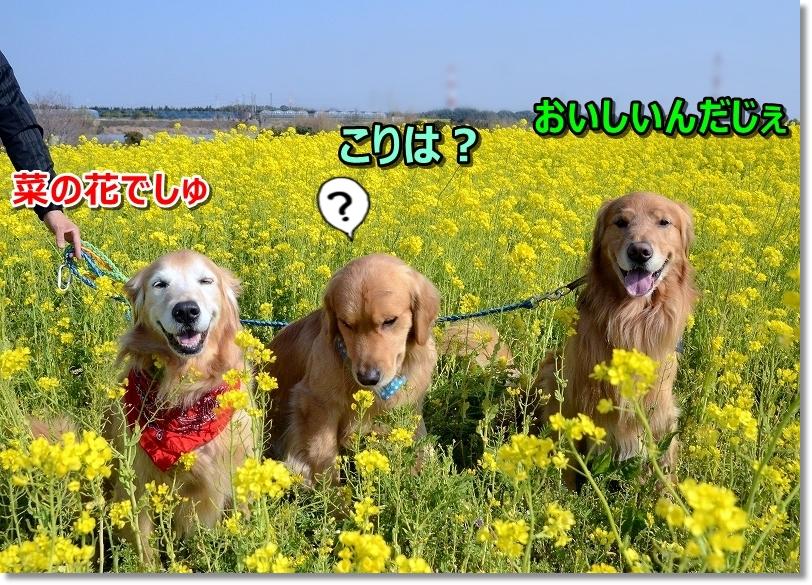 DSC_9113綺麗なお花でちね~