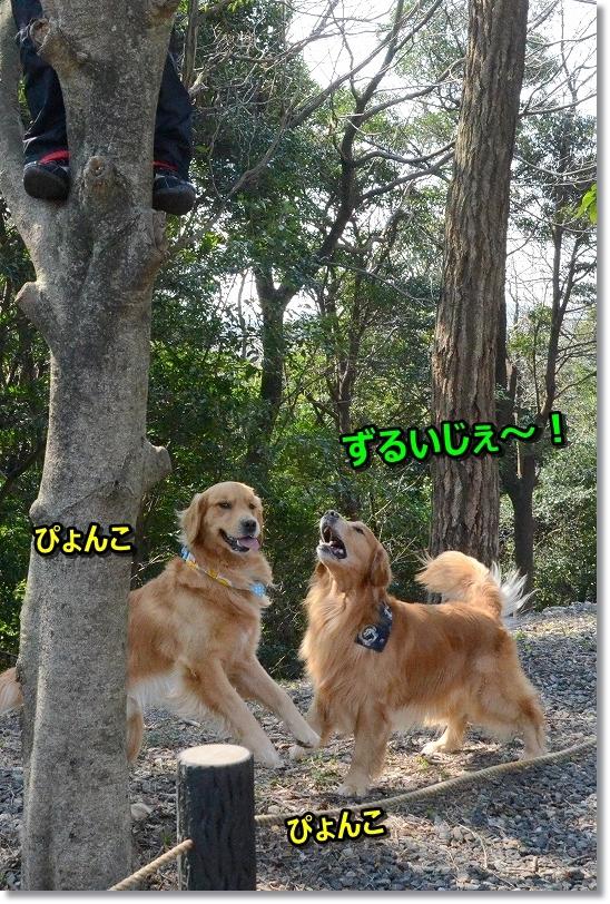 DSC_9174ギャオスとぴょんこ