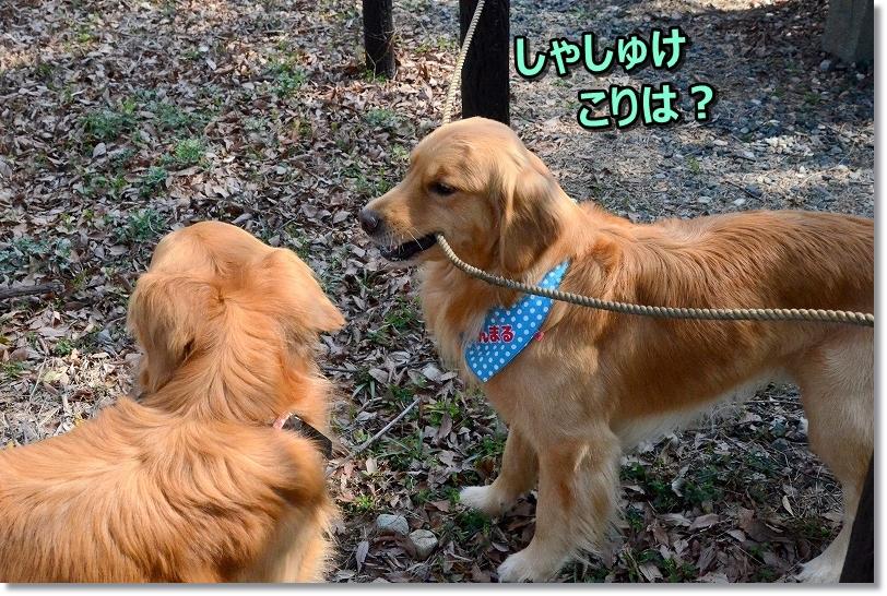 DSC_9194ふむ・・
