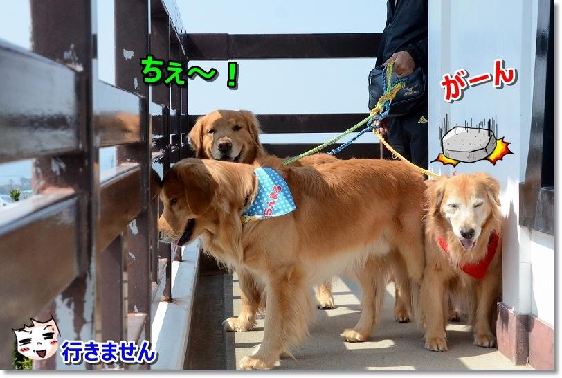 DSC_9282行かな~い ちぇ~